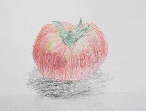 「トマト」色鉛筆デッサン
