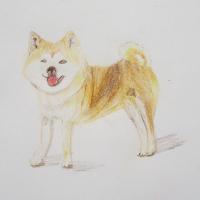 色鉛筆デッサン